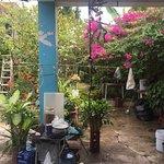 garden outside of house