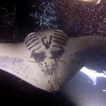 Pics from Manta Ray night dive 2017 01 15
