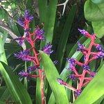 Kona Kai Resort, Gallery & Botanic Garden Photo
