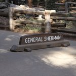 Sit in Front of this when taking your General Sherman Photo