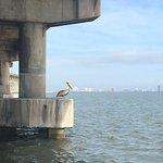 A pelican under the bridge to SPI