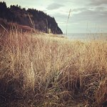 Fort Worden beach grass