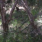 Weka - in natural bush environment