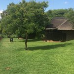 Photo of Bakubung Bush Lodge