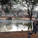 The busy waterhole