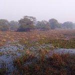 wetlands of bird sanctuary...............