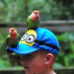 Parrots are everywhere