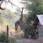 Photo de Tarangire Safari Lodge