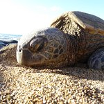 Turtles on the beach near the resort