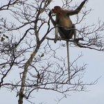 Tabin Wildlife Reserve Foto