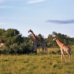 Bushwa Private Game Lodges Foto