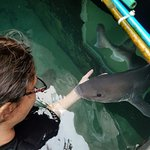 Special moment between me and Bean, one of our two female Smooth Hound sharks that you can swim