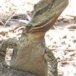 Foto di Bundaberg Botanic Gardens