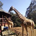 Ground floor giraffes w/ balcony in background