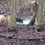 Wild feral hog on one of the nature trails.