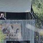 Beobachtungsplatz, direkt am Wasserloch