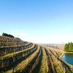 Spring at the vineyard