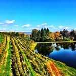 Fall at the vineyard