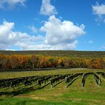 Our Leaser Lake Vineyard - historical property