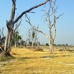 Moremi Wildlife Reserve Foto