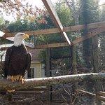Zoo Atlanta Foto