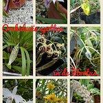 Botanical Gardens (Hortus Botanicus) Foto