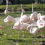 Flamingos in der Wilhelma