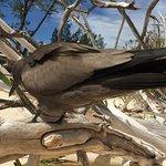 Bird Island Lodge Foto
