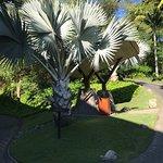 natural white palm tress