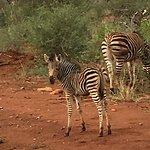 Molori Safari Lodge Bild