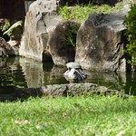 Lago en el Jardín Japones