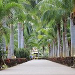 Riu Guanacaste - Path to the Beach!