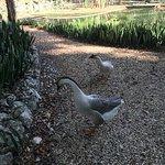 Patos con su patito