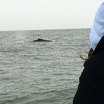 Whale spout