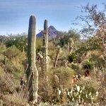 Foto di Museo del deserto dell'Arizona-Sonora