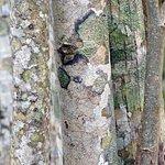 Beech bark trees