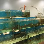 Foto Kim's Seafood Palace