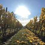 Sonoran Estate Winery