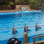 uShaka Marine World Photo