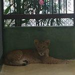 500bath pour voir des tigres qui on l air droguer ,1000 bath pour se faire prendre en photo avec