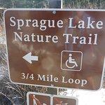 Sprague Lake Trail, Easy !!