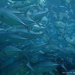 Foto van Spheredivers Homestay & Scuba Diving