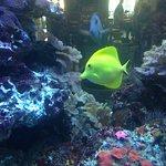 Pretty fish tank