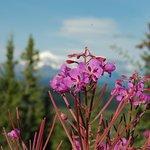 Copper River Princess Wilderness Lodge Foto