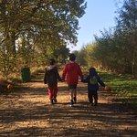 Exploring the trail of pumpkins