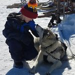 Pagosa Dogsled Adventures Photo