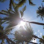 Photo de Hotel Riu Yucatan