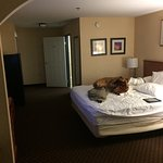 Foto di Comfort Inn & Suites near Long Beach Convention Center