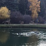The deer walk right up to you and are seen around the lake.