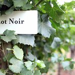Renowned Pinot Noirs of the Willamette Valley